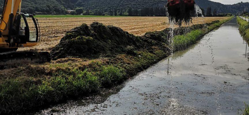 """Consorzio di Bonifica in azione per rimuovere il """"myriophyllum aquaticum"""""""