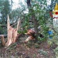 """Maltempo, Mati (Confagricoltura): """"Gli alberi cadono per la mancata cura non per il maltempo"""""""