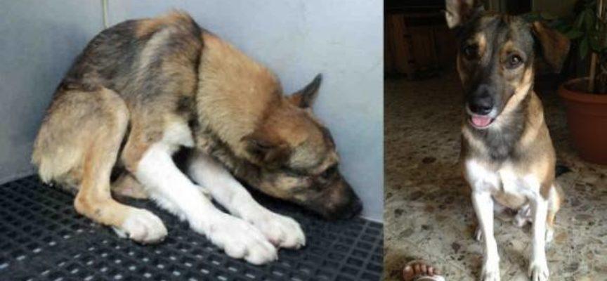 Il cane maltrattato pensava di meritare di morire, è stato smentito in modo esemplare