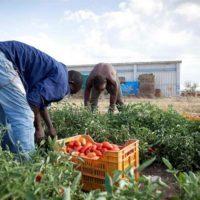 Schiavi dei nostri campi: braccianti costretti a lavorare 14 ore al giorno e a bere dai fossi