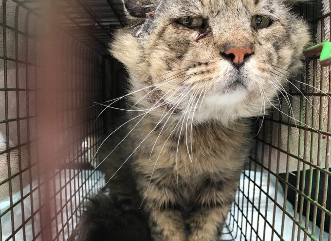 Il gatto selvaggio si trasforma in compagno inseparabile per la  mamma dopo essere stato salvato