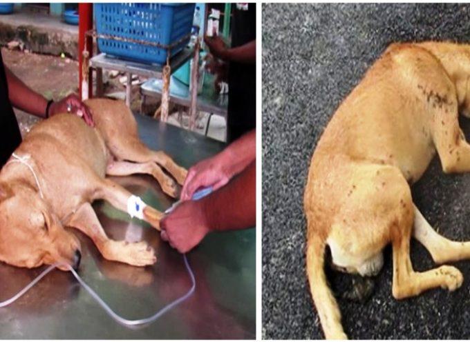 Erano devastati perché il cane che avevano salvato non ce l'avrebbe fatta, ma il giorno dopo tutto è cambiato