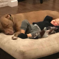 Il loro piccolo si ammala e accetta solo di stare con il suo migliore amico Pit Bull