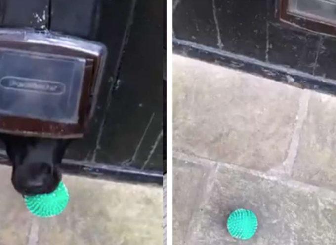 Il piccolo cane intelligente convince il ragazzo a giocare a palla con lui attraverso un buco nella porta