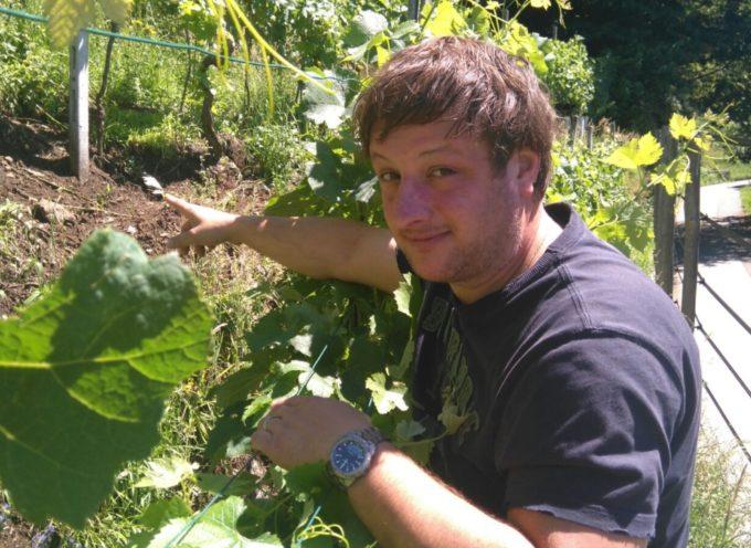 Vigneti e colture devastati dai selvatici, Marchetti (FI) incalza la Regione «Se l'ungulato vendemmia, l'agricoltore… che fa?