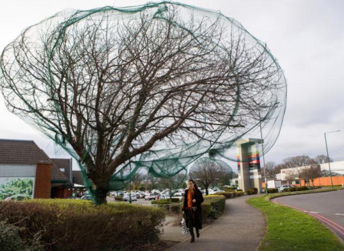 Il piano malvagio di un'intera popolazione per impedire agli uccelli di nidificare sugli alberi