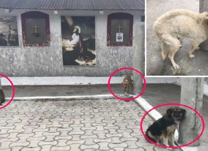 Questi 18 cani incatenati fuori da una chiesa non possono credere che qualcuno sia venuto a salvarli