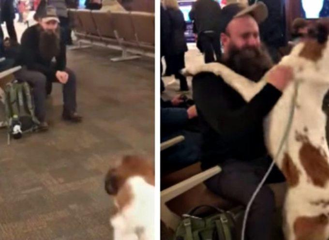 Cane vede l'uomo con la barba in aeroporto e impazzisce quando riconosce la sua faccia