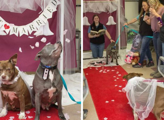 Un canile celebra il matrimonio indimenticabile di questi cani anziani