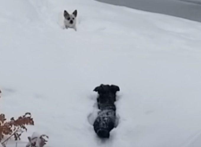 Viene bloccato dalla neve andando a far visita al suo amico, ma la loro amicizia è più forte