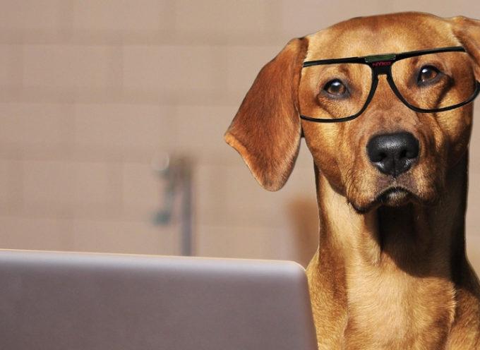 I cani riducono lo stress e aumentano la produttività sul lavoro