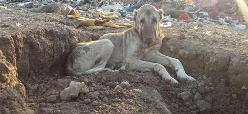 Vide l'immagine di un cane anziano che viveva in un cassonetto e sapeva che doveva fare qualcosa al riguardo