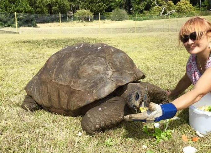 Incontrare Jonathan la tartaruga, che ha 187 anni, è l'animale più vecchio del mondo!