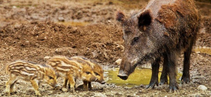 Economie rurali, caccia e fauna selvatica; Marchetti (FI) «Senza Piano niente visione d'insieme