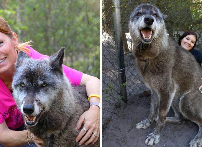 """Scopre che il """"cane"""" che ha adottato non era quello che credeva e decide di farlo sopprimere"""