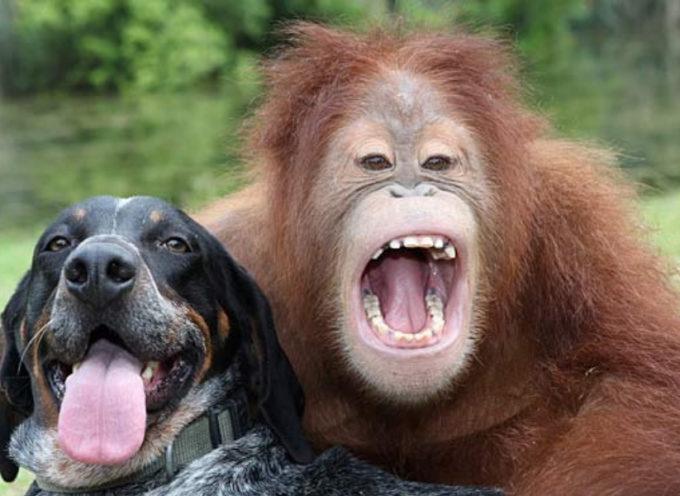 Questo è il video più carino mai realizzato sull'amicizia tra animali