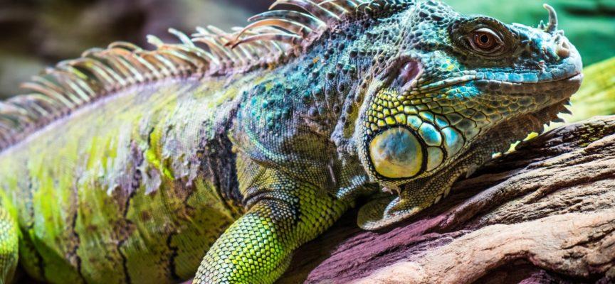 Animali esotici in Italia: i piu' venduti e le regole