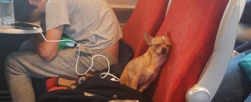 25 foto toccanti che ti faranno venir voglia di avere un animale domestico