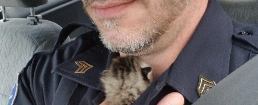 L'agente salva il gattino da sotto una casa quando sente il gattino dopo 2 giorni di ricerca