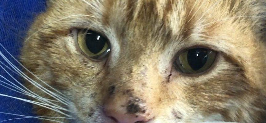 Gatto timido cerca di nascondersi da tutti finché non incontra 3 gattini che cambiano la sua vita