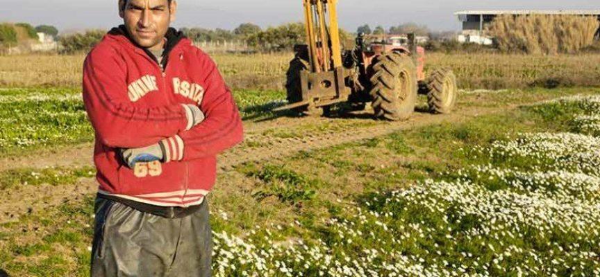 Lavoro. La quota stranieri nei campi italiani è al 20%