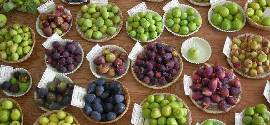 I frutti che ci accompagnano verso l'autunno: i fichi.