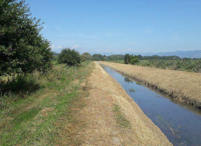 A Porcari , in zona padule, i nostri operai hanno tagliato la vegetazione cresciuta nella Fossa Nera