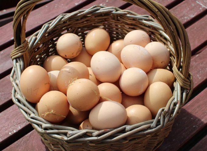 Le uova d'agosto.
