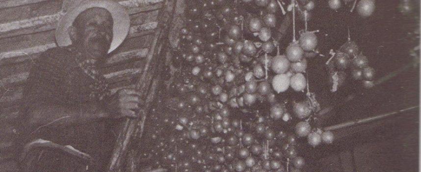 Le scorte per I'inverno: i pomodori appesi.