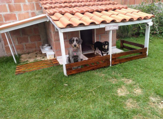 Incontra Dominique, il cane che ha la sua casa dotata anche di telecamere di sicurezza!