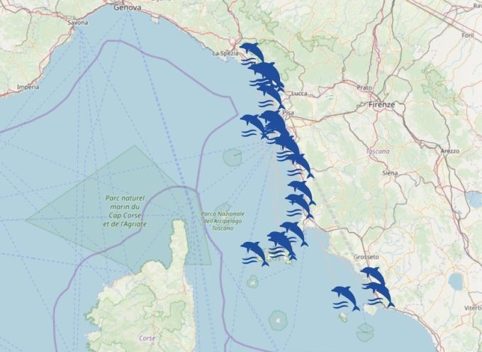 Mappa interattiva e risultati analisi per gli spiaggiamenti di cetacei in Toscana