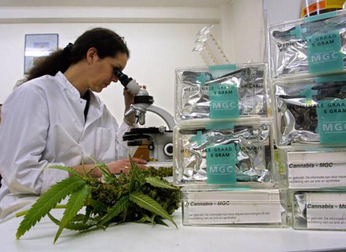 Dalla Cannabis un trattamento efficace contro il cancro al pancreas (metastasi comprese). Lo studio