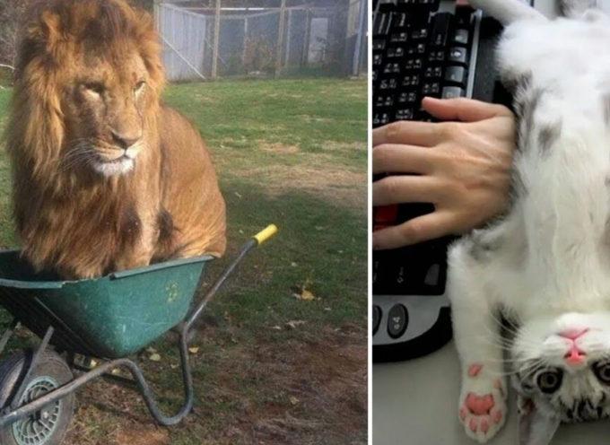 22 animali che trovano i posti più incredibili