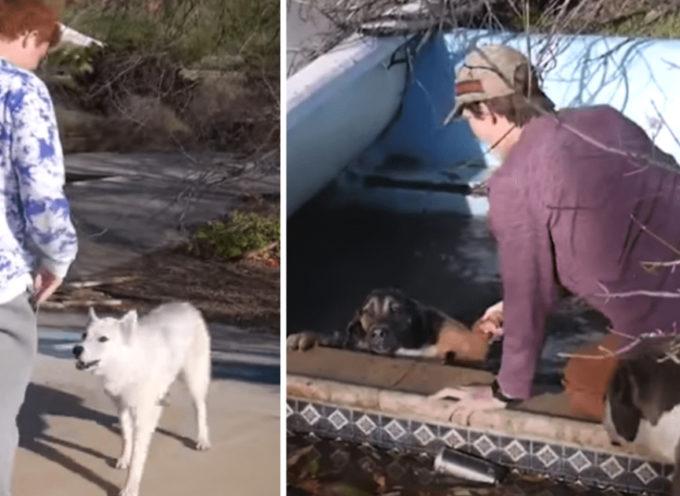 Cani randagi chiedono aiuto a dei ragazzi per salvare un loro amico intrappolato in una piscina