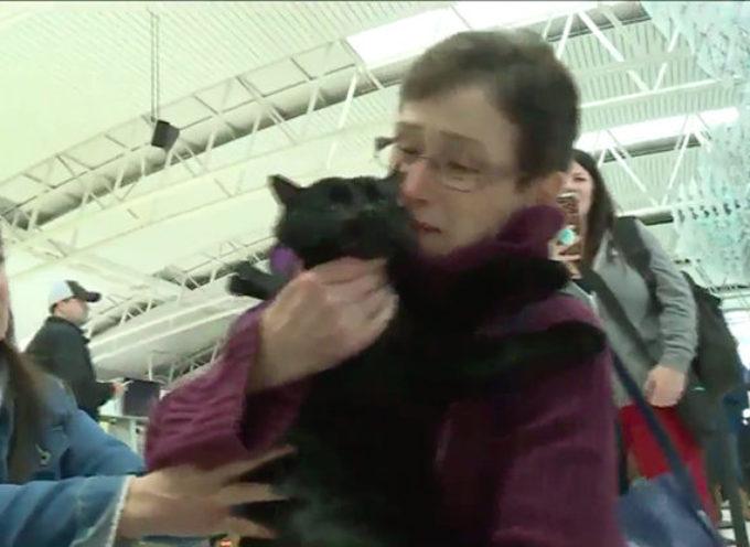 Perde il gatto durante un incendio, ma dopo 4 mesi di ricerca riabbraccia il suo amico peloso