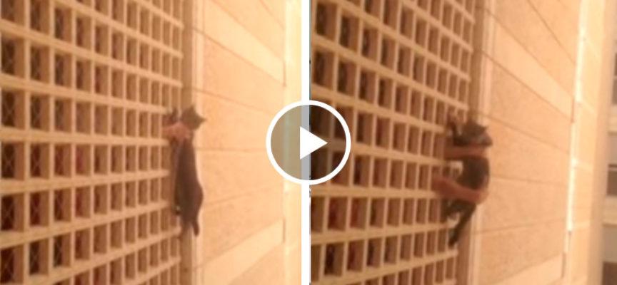 Studenti salvano gatto da una caduta dal 7 ° piano dei dormitori dell'Università ebraica