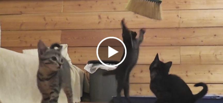 Cercando di spazzare il pavimento con un mazzo di gattini in giro