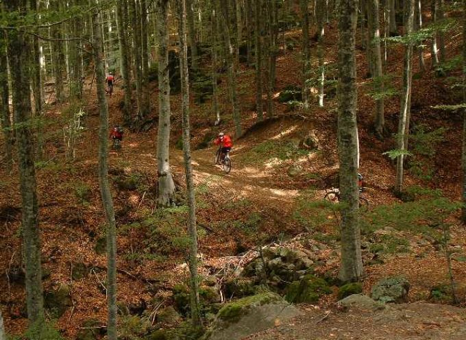Agricoltura: 12 milioni dalla Regione per azioni a tutela del patrimonio forestale