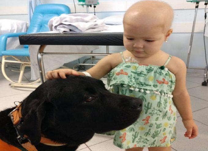 Labrador porta gioia ai bambini malati in un ospedale pediatrico a Florianópolis