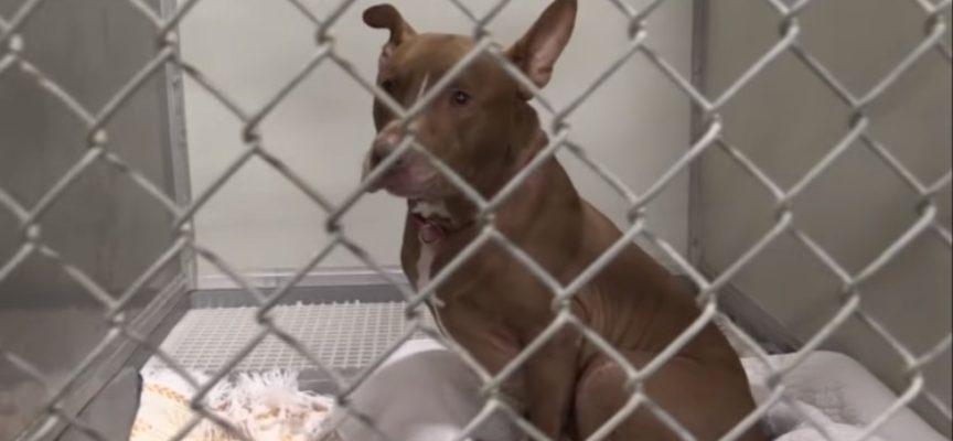 Geronimo, il cane che ha aspettato pazientemente 1145 giorni per una nuova casa