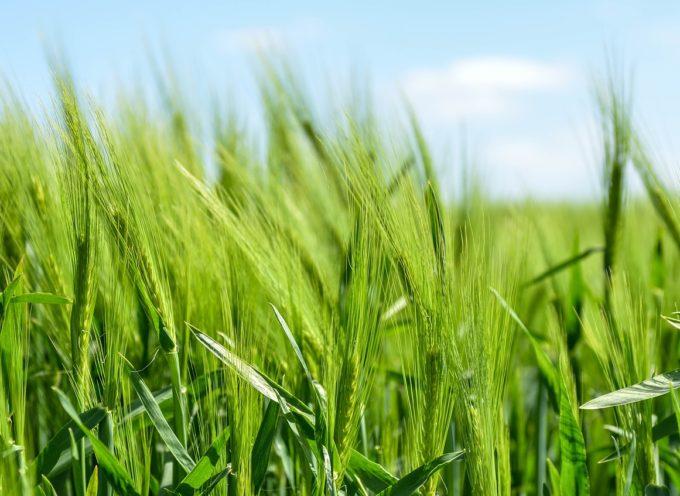 Toscana: 10 milioni di euro per l'agricoltura