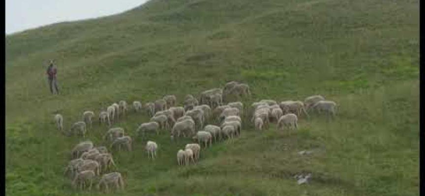 Pecore, cani e turisti; il delicato equilibrio della montagna