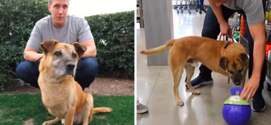 Promette a un cane a 3 zampe di comprare tutto ciò che tocca in un negozio e portarselo a casa