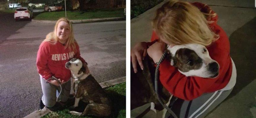 Dopo 8 anni questo cane riesce a incontrare il suo proprietario che non ha mai smesso di cercarla