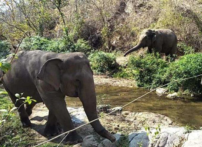 Questo vecchio elefante è stato salvato e per la prima volta nella sua vita ha potuto fare amicizia