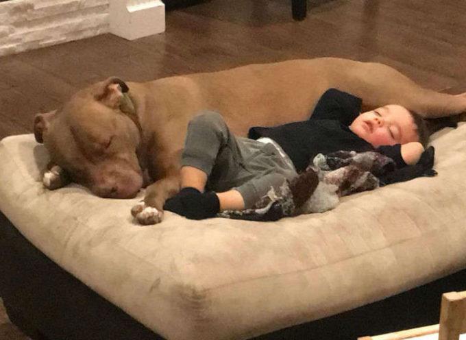 Un bambino ha l'influenza e non vuole che nessuno lo consoli, tranne il suo cane