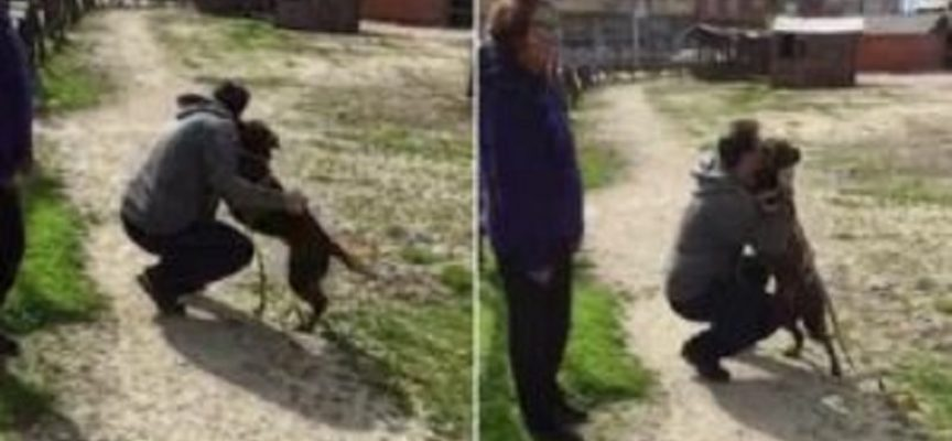 Il cane perso da tre anni esplode di gioia dopo aver realizzato che l'uomo davanti a lui è il suo vecchio padrone