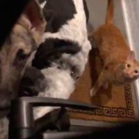 L'uomo apre la porta del suo appartamento e trova un'intera banda di animali
