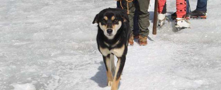 Il cucciolo abbandonato segue gli scalatori per 7000 metri attraverso una montagna