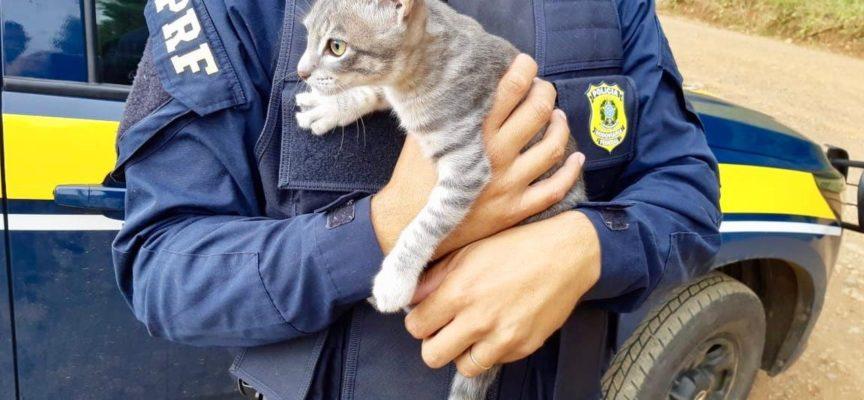 Uomo arrestato per aver abbandonato il gatto ai margini della strada